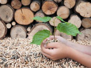Eine Hand hält einen jungen Baum und Holzpellets. Im Hintergrund ein Holzstapel und Holzpellets