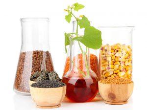 verschiedene Biomasse zur Produktion von Biotreibstoff